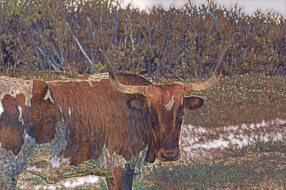 Leather Longhorn Cow