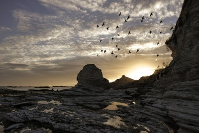 Seals, birds and sunset