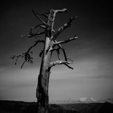 Best shot of an old dead tree