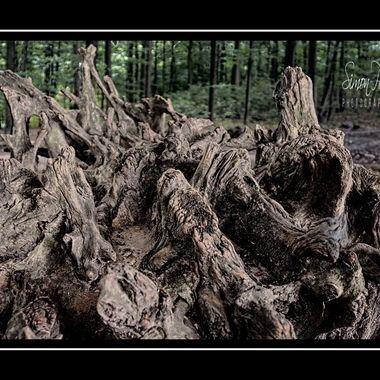 Old-2014 (29)ls_pe    The Stump