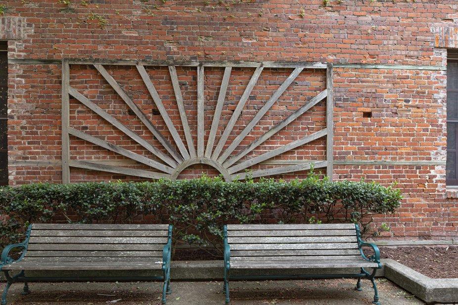 Empty benches in a walk through garden