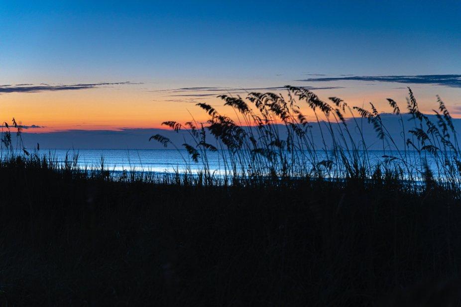 Sunrise silhouette of sea grass