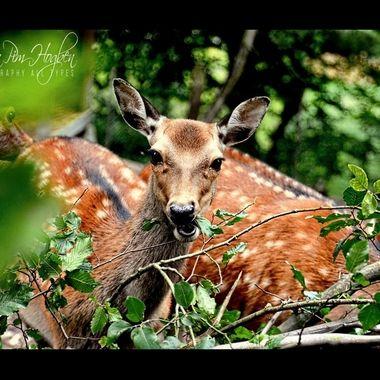 Old-2014 (100)ls_pe      Oh Deer.