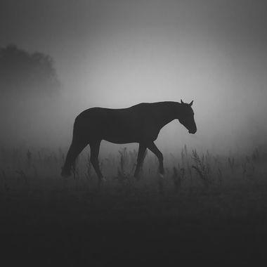 Horses in shape
