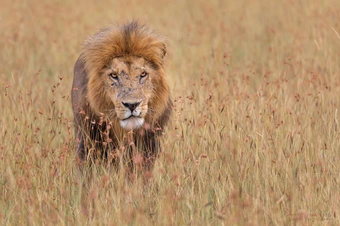 Barakoi by donvawter - Safari Wildlife Photo Contest