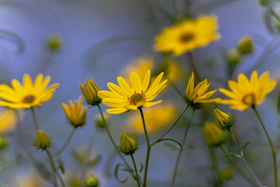 Small sunflower garden unearth fall
