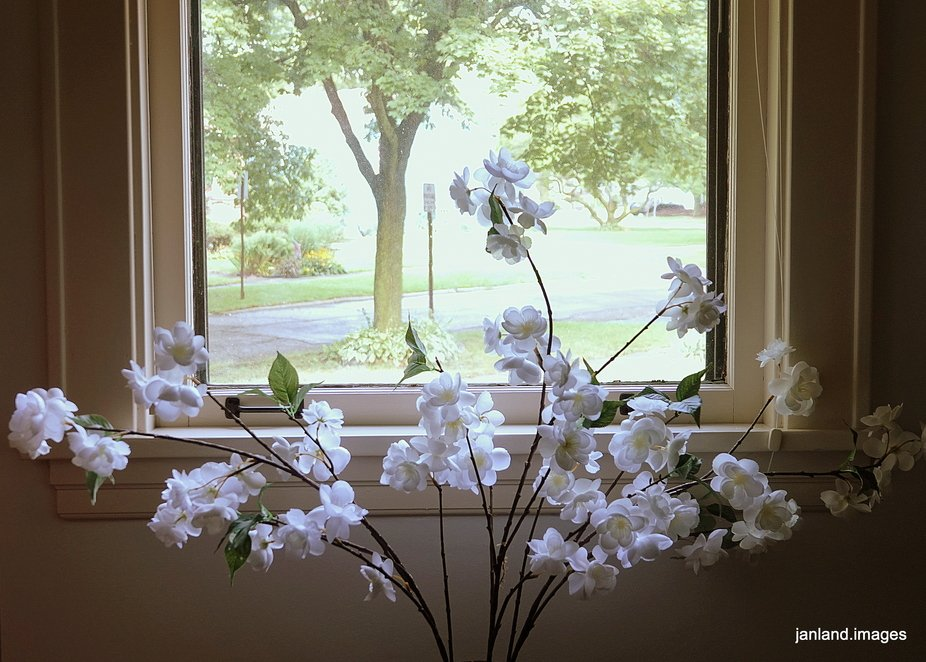 Front Window View