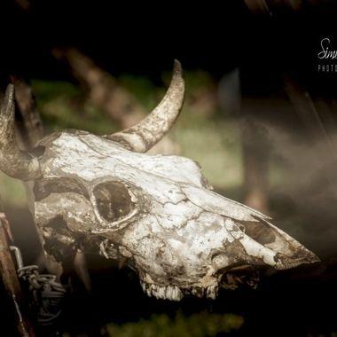 TTreff-2014 (23)_pe   Skullduggery.