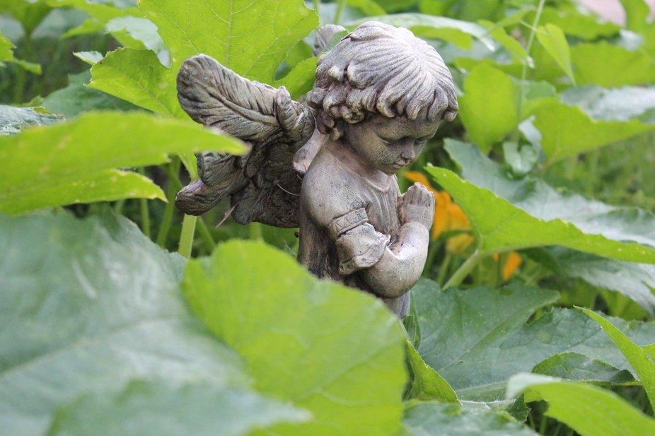 A little bit of prayers for the garden never hurt.
