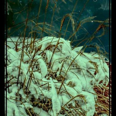 DSC_1754_pe      Cold Night