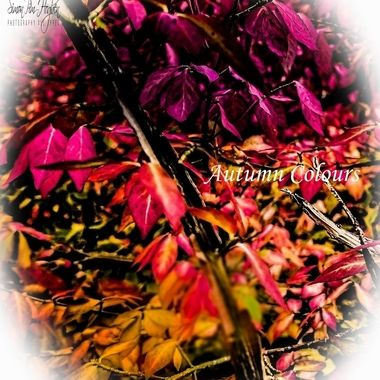 IMG_20191012_144351_pe   Autumn Colours