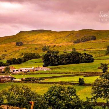 pim (6)_pe   My Beloved Yorkshire.