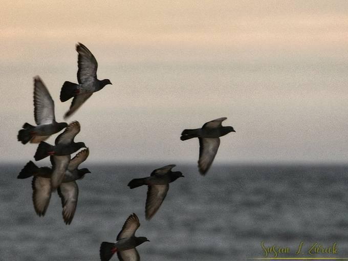 Photobomb by pigeons!