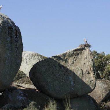 Nidos sobre bolos de granito. Nido de ciconia comun o blanca (ciconia ciconia), sobre bolos de granito en los Barruecos (Caceres-Spain).