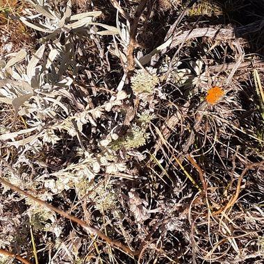 sage and lichen