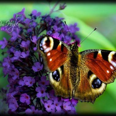 PIM_2595_pe     BF & Flower