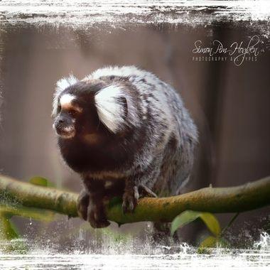 PIM_4649_pe     Monkey Business.