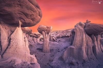 Mushrooms Of Mars