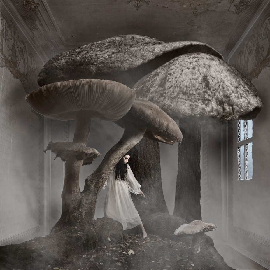 Mushroom dream in darkroom series