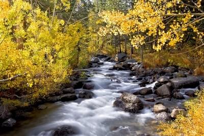 Fall Color, Bishop Creek