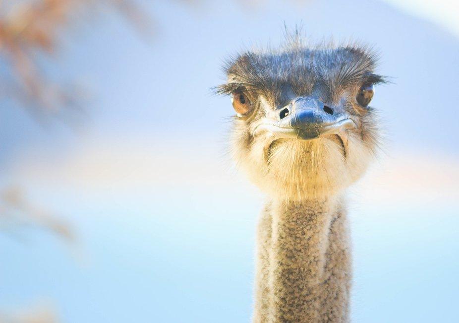 Up close with an ostrich