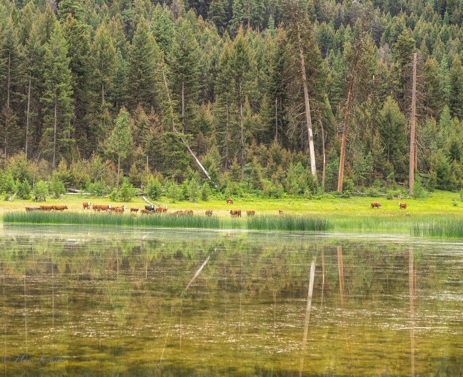 Reflections at Rocky Ridge