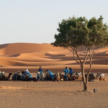 Caravana de Tuaregs descansando en un Oasis por la zona de Erfoud en Marruecos (Africa).
