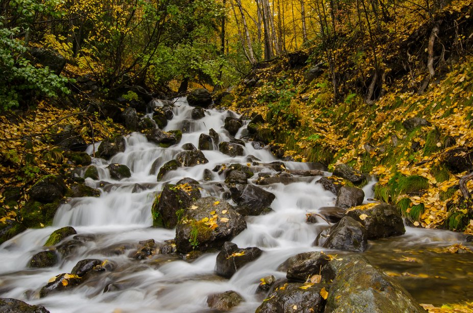 During a recent trip to Alaska, I took this on an outing with a professional photographer in Anch...