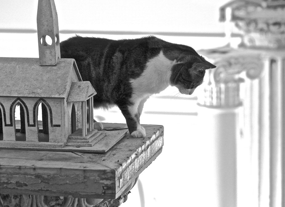 Our kitty on the top of a column in our home...( no she did not jump )