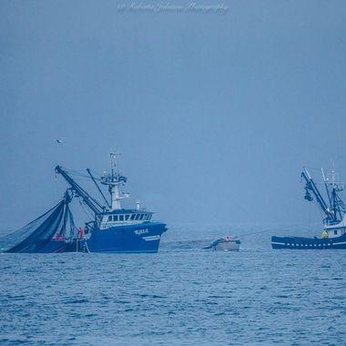 Seiner Fishermen hard at Work