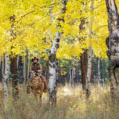 Cowboy in the Aspens