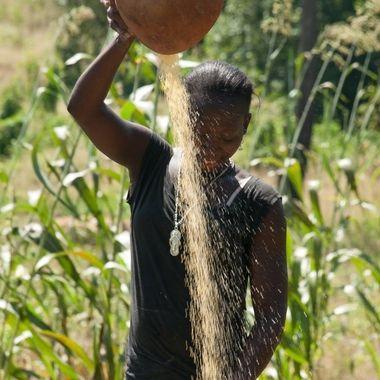 Agricultora senegalesa,separando el cereal de su cascara, en un poblado del interior de Senegal