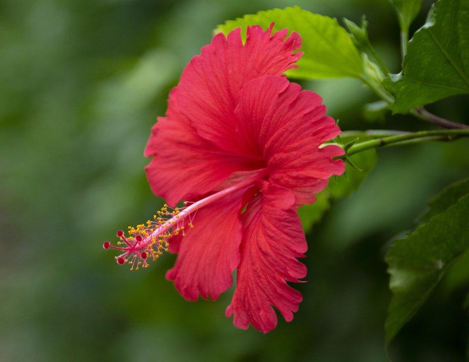 TW Flower