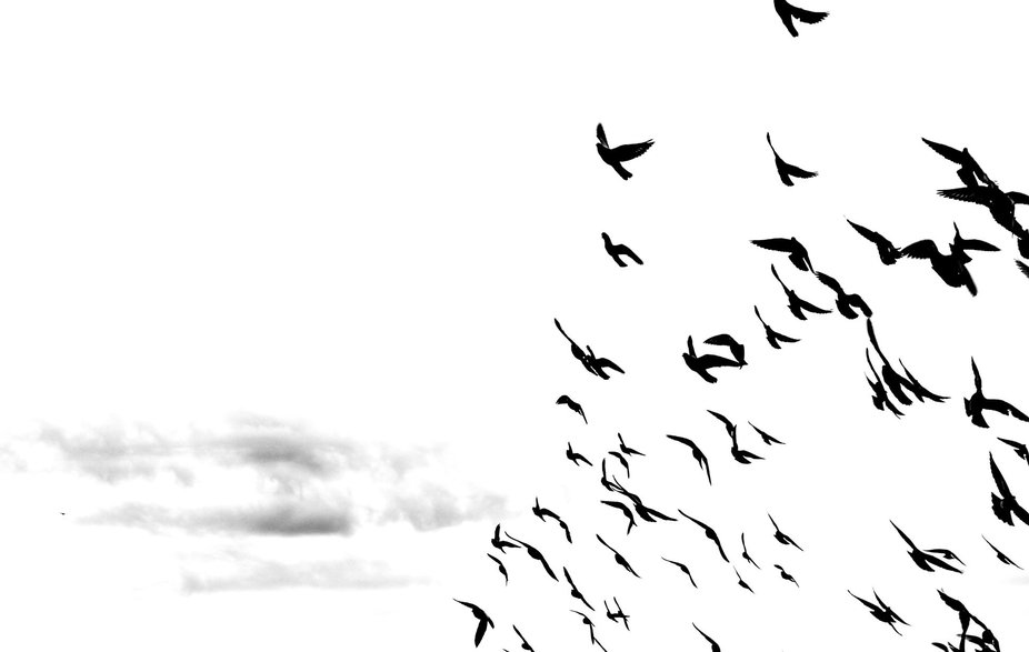 I want to be free, just like them