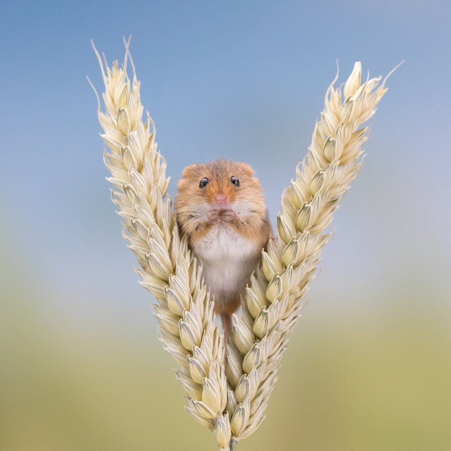 4 grams of cuteness! by EpicByErika - Small Animals Photo Contest