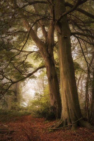 Autumn Mist, England