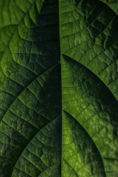Shadows of green
