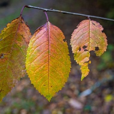 autumn leafs in varying stage of decay