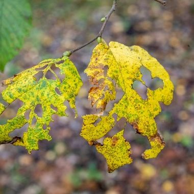 autumn leafs in decay