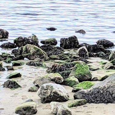 Salt Sand Seaweed