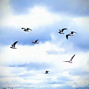 Sea The Sea Of Seagulls
