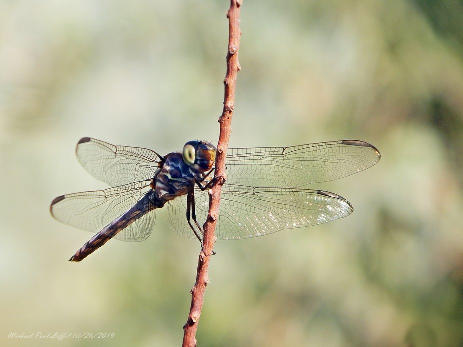 Fly! Dragonfly fly!!!!