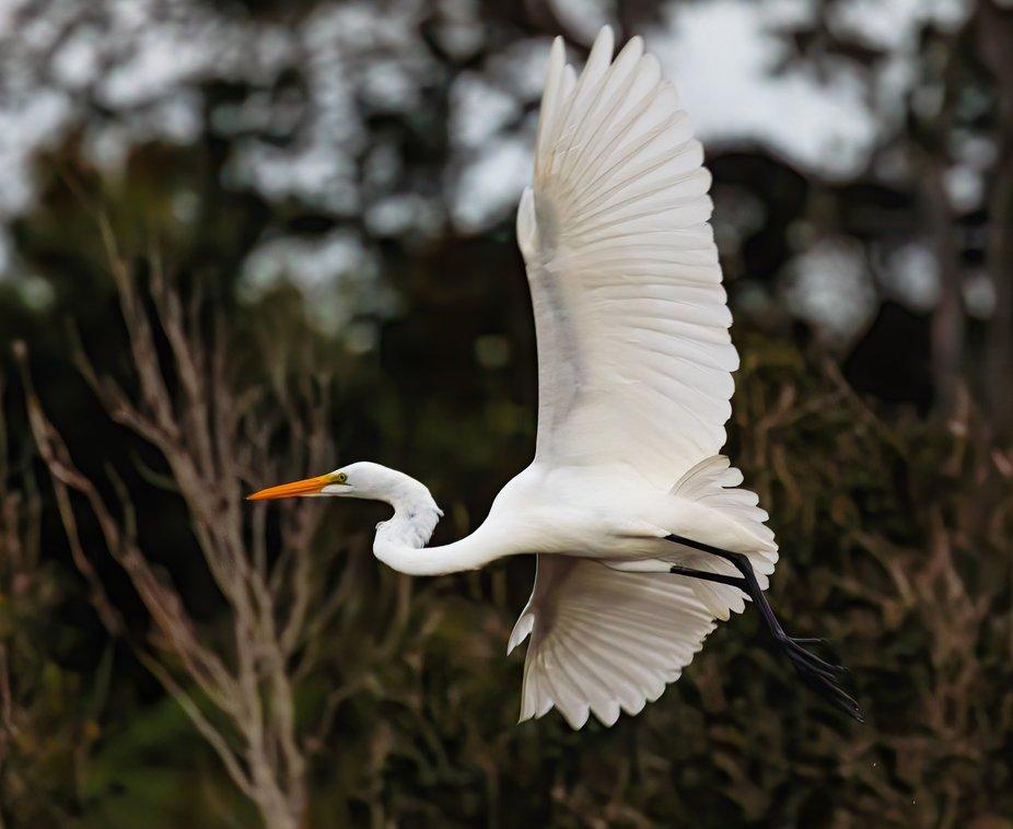 Working on catching birds in flight.