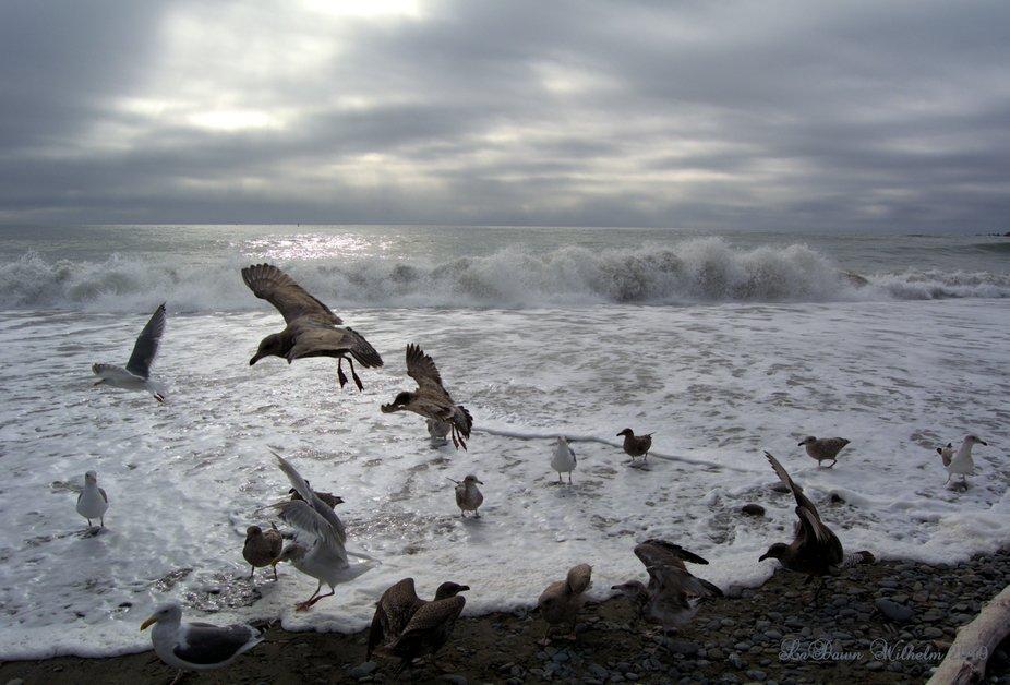 Gulls on the Coast