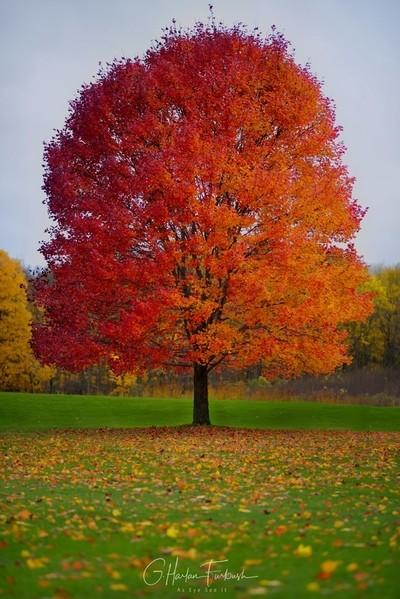 October's Magic