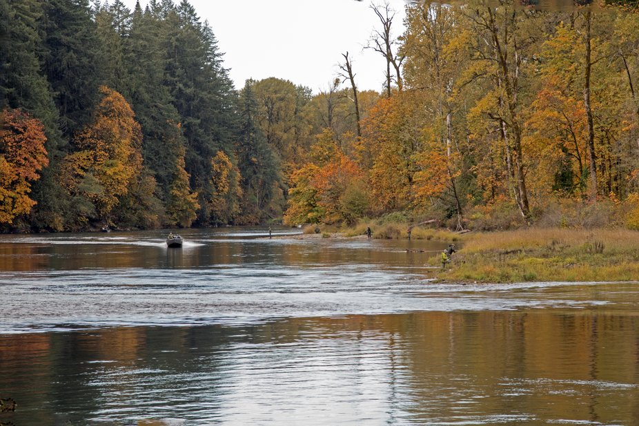 The Lewis River is famous for its fishing both along the banks and by boat.