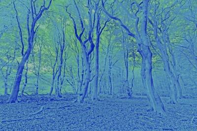 _MG_2983_DxO-1- Blue Hour