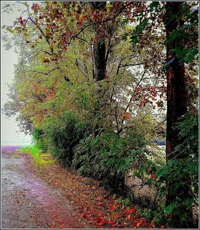 Cadono le foglie in autunno.