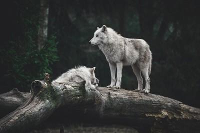White couple time