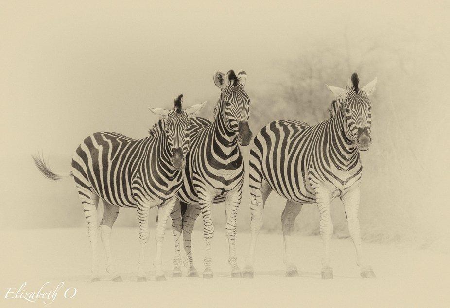 Zebra roadblock.......